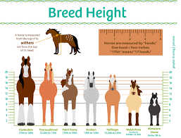 average height of couch seat horse height chart