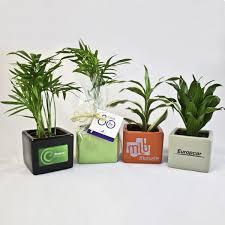 plante d駱olluante bureau plante publicitaire une rentrée sous le signe du végétal