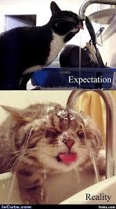 Expectation Vs Reality Meme - expectation vs reality meme generator captionator caption