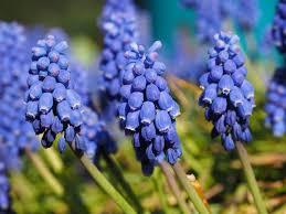 Hyacinth Flower 18 Spring Flowers For A Beautiful Garden Garden Design