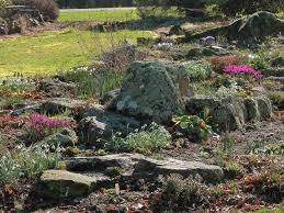 australian native water plants australian native plants for rock gardens that can survive the