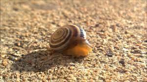 a leisure snail youtube