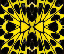 yellow and black background pattern made from bird wing butterfly