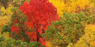 fall color show started northern wisconsin wnmu fm