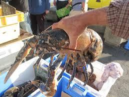 comment cuisiner un homard congelé comment cuisiner un ragout de homard de l ile de sein