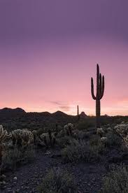 Seeking Cactus Cast Desert Sunset Cactus Landscape Printed Photography Backdrop 4634