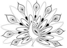 peacock coloring pages sheets 5461