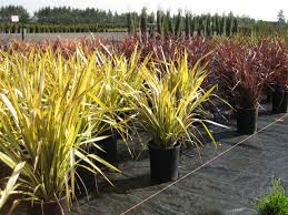 native plant nursery brisbane landscape nursery design home ideas pictures homecolors