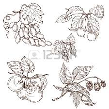 round frame of different fruits hand drawn sketch of apple
