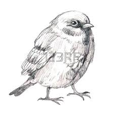 robin bird stock photos royalty free robin bird images and pictures