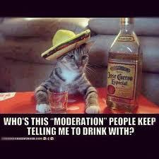 Jose Cuervo Meme - saucypython26 hahahaha too great josecuervo cat sombrero