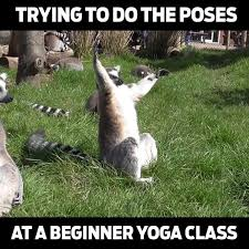 Yoga Meme - beginner yoga meme watch or download downvids net