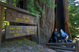 Chandelier Tree Address Drive Through A Redwood
