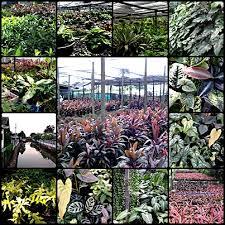 plant nursery tropical and ornamental plant thailand