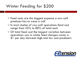 winter feeding a cow for less than 200