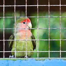 little red and green lovebird in wire cage photograph by anya