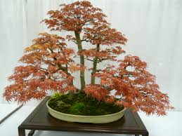 first bonsai move to bigger pot or plant in garden