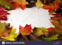 writing paper with space for picture vector frame white space writing stock photos vector frame white a frame of colorful autumn leaves and wind fall nuts and berries around white textured