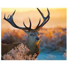 diy 5d animal horse elk diamond embroidery painting cross stitch
