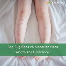 bed bug bites vs mosquito bites what u0027s the difference oct 2017