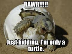Turtle Memes - turtle meme weknowmemes