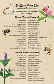 native plants for bees native perennials for native bees and or honey bees 5 u201dx8