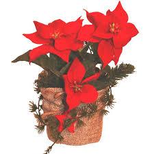artficial poinsettia plant in hessian pot shelf edge