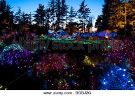 Oregon Garden Christmas Lights Christmas Lights At Shore Acres State Park Oregon Stock Photo