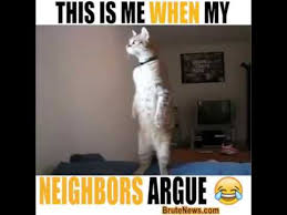 Cat Fight Meme - neighbor s fight video meme youtube