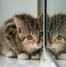 heart disease in cats symptoms of heart disease in cats