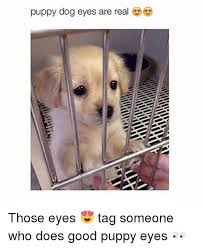 Puppy Dog Eyes Meme - 25 best memes about puppy dog eyes puppy dog eyes memes