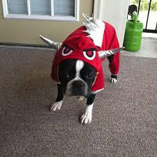 halloween costume ideas for boston terrier dogs