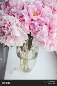 bouquet of pink peonies peony roses flowers in vase on white