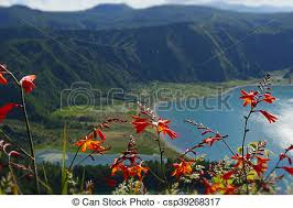 volcano flowers amazing landscape view of crater volcano lake in sao miguel