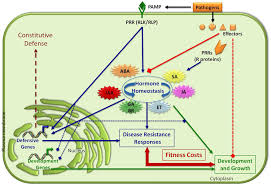 Diseases In Plants And Animals - frontiers disease resistance or growth the role of plant