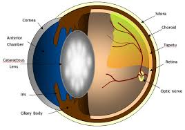 Can Cataracts Cause Blindness Cataractsurgery Jpg