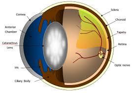 Blindness After Cataract Surgery Cataractsurgery Jpg