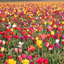 flower places best places to see flowers in america popsugar smart living