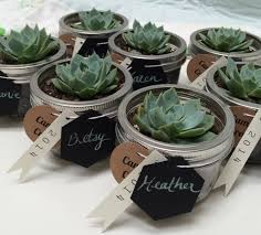 mini succulents in mason jars gifts or place settings gift