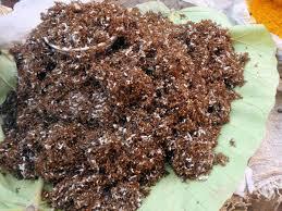 fourmis cuisine fourmis grillées définition et explications