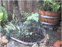 backyards impressive backyard koi pond ideas small backyard koi