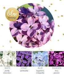 lilac flowers lilac meaning and symbolism ftd