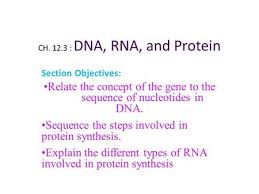 section 12 3 rna and protein synthesis worksheet answers aca