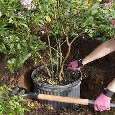 gardening tips home gardening tips southern living