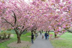 best things to do in spring in nyc from festivals to street fairs