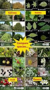 Fruit Tree Identification - tree id usa identify over 1000 of america u0027s native species of