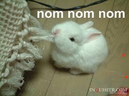 Nom Nom Nom Meme - image bunny om nom nom nom jpg meme wiki fandom powered by wikia