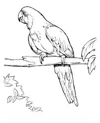parrot coloring pages adults free print 2