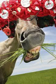 Kentucky Derby Flowers - 10 horses wearing kentucky derby hats
