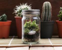 how to make a terrarium diy succulent terrarium